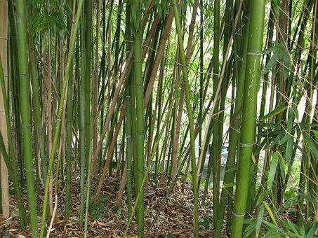 Giverny, Monet, Garden, Bamboo, France, Claude, Nature