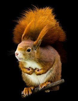 Animal, Squirrel, Possierlich, Close, Croissant