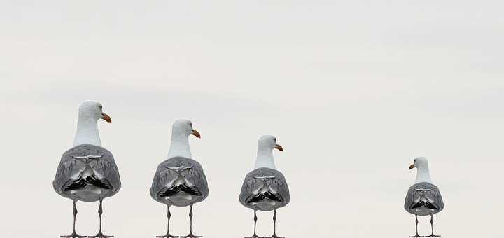 Gulls, Fun Photo, Background Image, Knokke, Belgium
