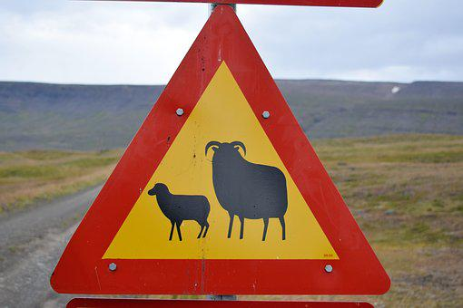 Sheep, Lamb, Warning, Sign, Road, Street, Animal