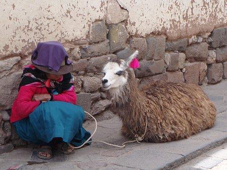 Lama, Alpaca, Peru, Mammal, Tourism