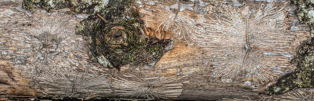 Log, Dead, Nature, Forest, Tribe, Bark, Structure, Wood