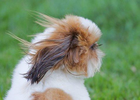 Eyelashes, Dog, Puppy, Windy, Pet, Animal, Canine