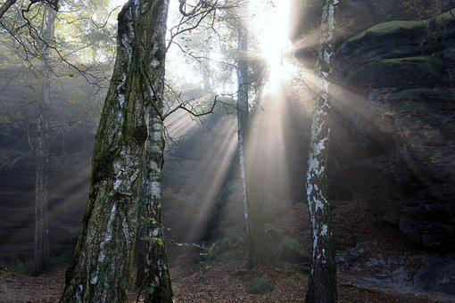 Fairytale, Sunbeam, Fog, Light, Mystical, Autumn, Birch