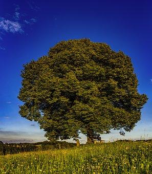 Tree, Individually, Meadow, Nature, Sky, Green