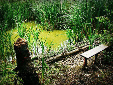 Swamp, Reed, Bench, Balance Beam, Tree, Thickets, Green