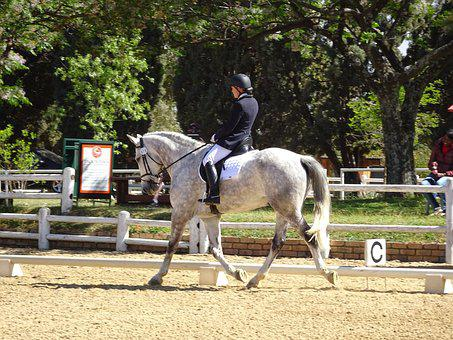 Horse, Show, Extended Trot, Dressage, Equine