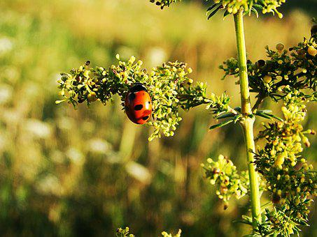 Of God, Ladybug, Plant, Green, Summer, Insect, Nature