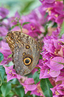 Butterfly, Nature, Insect, Animal, Close, Flower