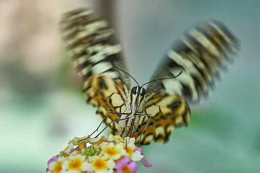 Butterfly, Wing Beat, Nature, Insect, Animal, Close
