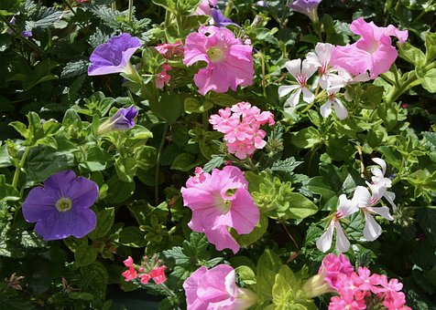 Flowers, Plants, Mauve Pink, Jardiniere, Plant, Green