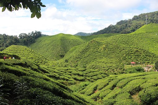 Mountains, Green, Hill, Landscape, Tea, Plantation