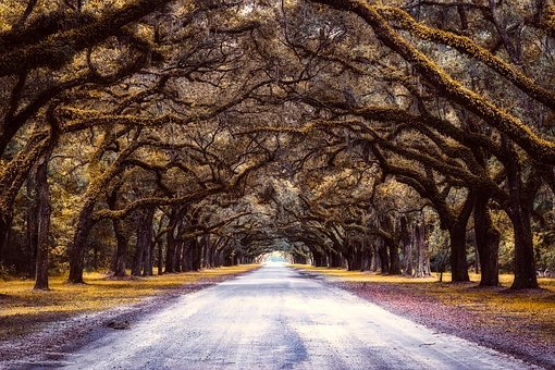 Trees, Canopy, Spanish Moss, Road, Nature, Outdoors