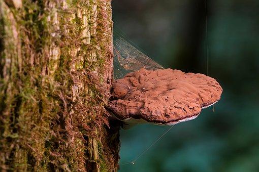 Mushroom, Tree Fungus, Rotten Get, Fungus