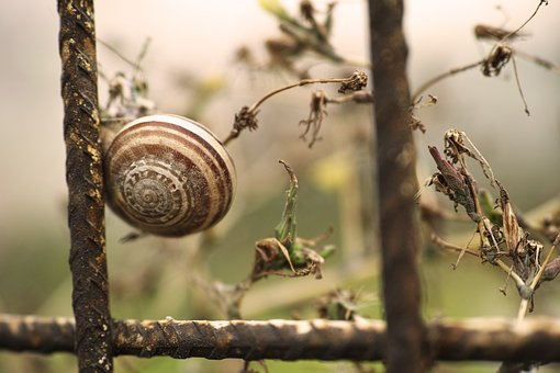 Snails, Insect, Yumusak A, Animal, Little, Macro