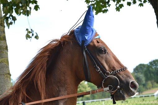 Horse, Head, Snout, Profile, Bonnet Ears, Net, Reins