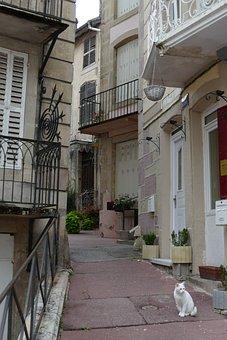 Street, House, Cat, Pet, White, Mammal, City