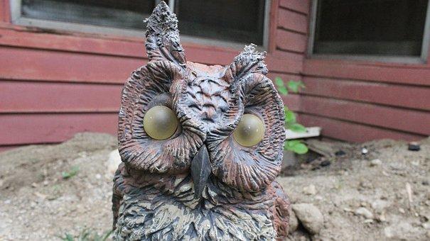 Barn Owl, Rough, Scary, Fake, One Ear, Chewed Ear