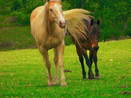 Pasture Buddies, Palomino, Bay, Horses, Equine, Meadow