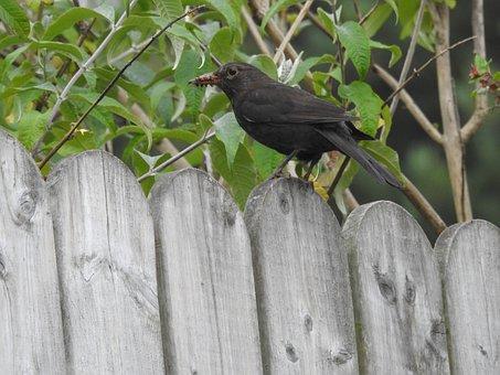 Bird Feeding, Wildlife, Nestling, Season, Fauna