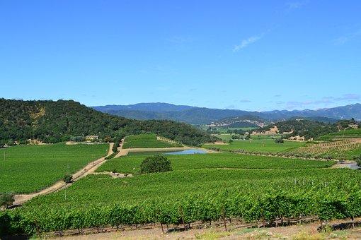 Shafer, Wines, Winery, California