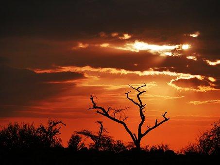 Tree, Dawn, Acacia, Dead Plant, Sunrise, Morgenrot