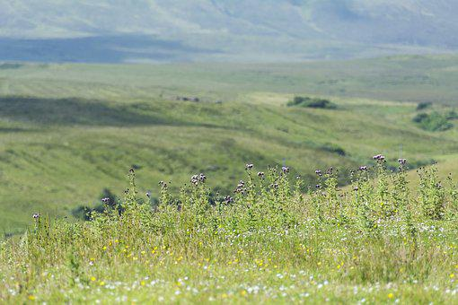 Scotland, Meadow, Landscape, Nature, England