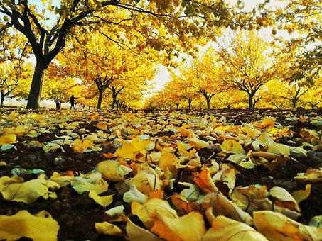 Autumn, The Leaves Are, Nature, Dry Leaves, Yellow