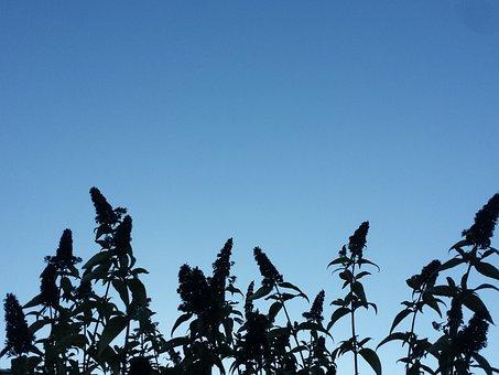 Plant, Silhouette, Sky, Plants, Stems, Flowers, Leaves