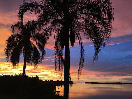 Florida, Vacation, Sunset, Palm Trees, Clearwater