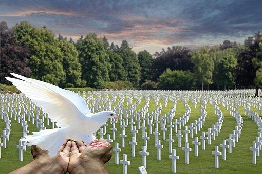 Peace Dove, White Dove, Cemetery, Fallen Soldiers