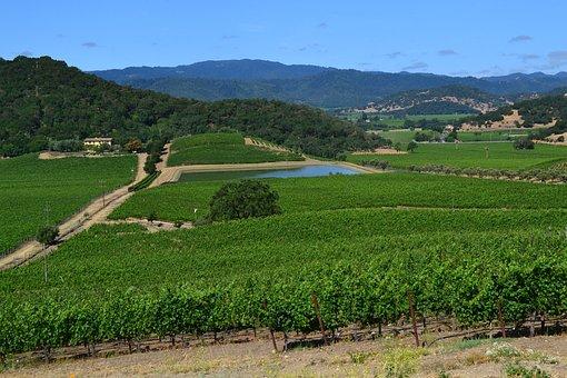 Winery, Wines, California