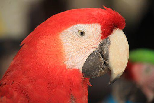 Macaw, Mexico, Ave, Bird, Zoo, Parrot, Animal