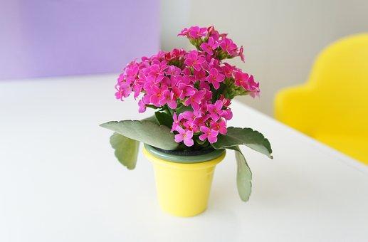 Flower, Pink, Vase, Nature, Pink Flowers, Blossom