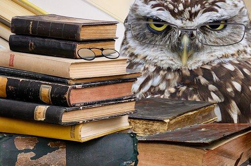 Owl, Books, Stack, Bird, Animal, Plumage, Animal World
