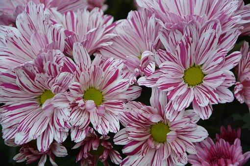 Flowers, Massif, Bouquet, Parterre, Plant, Purple