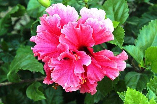 Daisy, Flower, Flowering, Plant, Spring, Summer, Petals