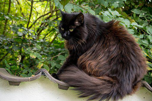 Cat, Thick, Fluffy, Thick Cat, Psychiatric, Garden, Out