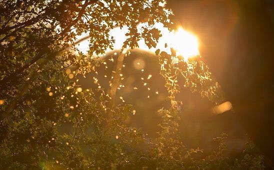 Light, Sun, Sunset, Summer, Sunlight, Sunny, Nature