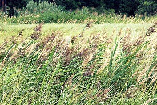 Plants, Scrubs, Nature, Spacer, Meadow Grass, Summer