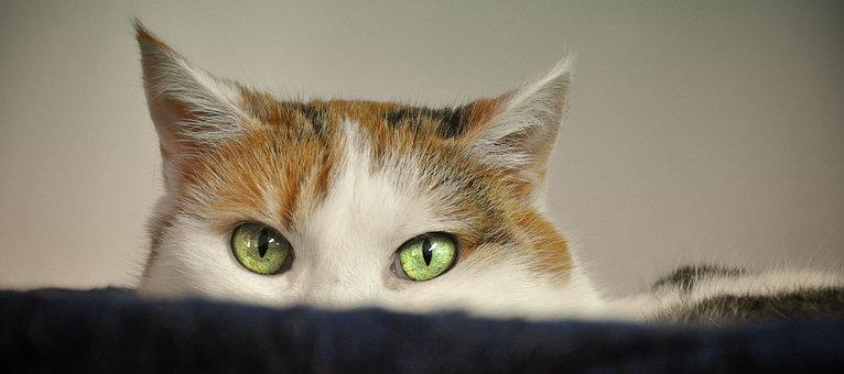 Cat, Animal Shelter, Scheu, Fear, Mieze, Animal Welfare