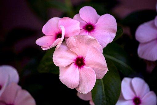 Kiss Painted, Flower, Nature, Garden, Flowers, Petals