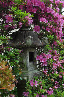 Pink, Flower, Japan, Pagoda, Peace