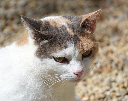Pussy, Eyes, Cat Eyes, Cat, Domestic Animal