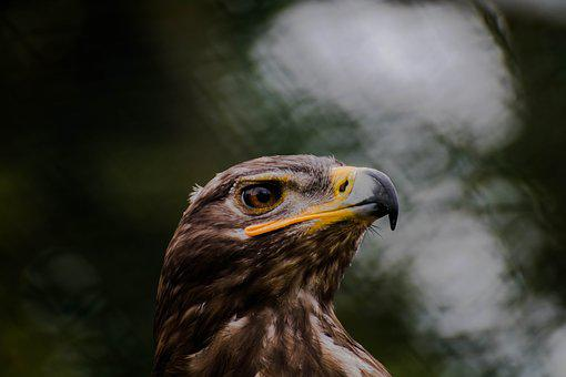 Raptor, Animal, Wild Animal, Wildness, Bird Of Prey