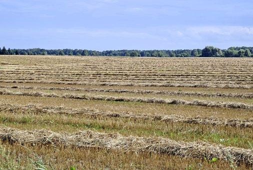 Harvest, Harvest Festival, Stubble, Straw