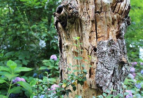 Tree, Bark, Wood, Woodland, Leaves, Green, Sunny