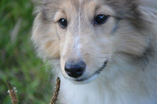 Dog, Snout, Nose, Trufe, Look, Eyes, Animal