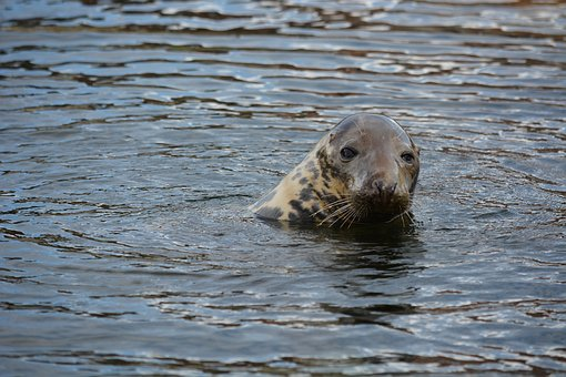 Animal, Visual, Aquarium, Seal Station, Friedrichskoog