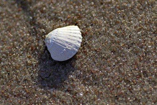 Scallop, Sea, Sand, Beach, Souvenir, White, Mussels